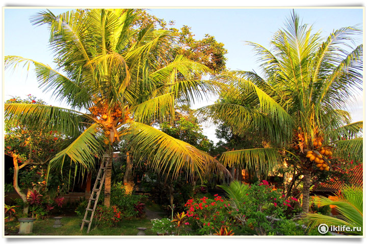 Во дворе деревни на Бали