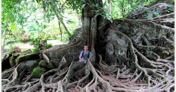 принцип дерева