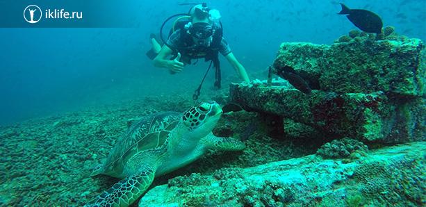 острова Гили и дайвинг с черепахами