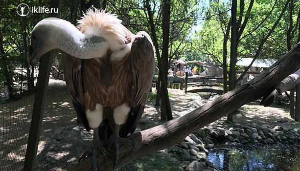Краснодарский зоопарк