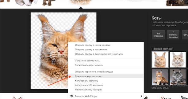 Как сохранить картинку из интернета