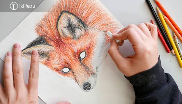 Работа иллюстратора