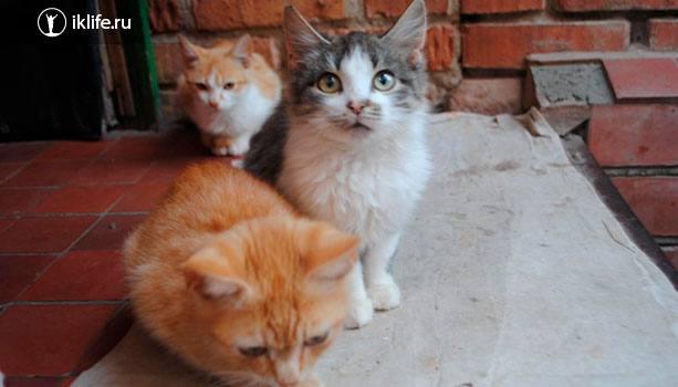 Любительский снимок котов