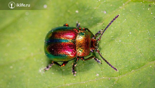 Снимок жука