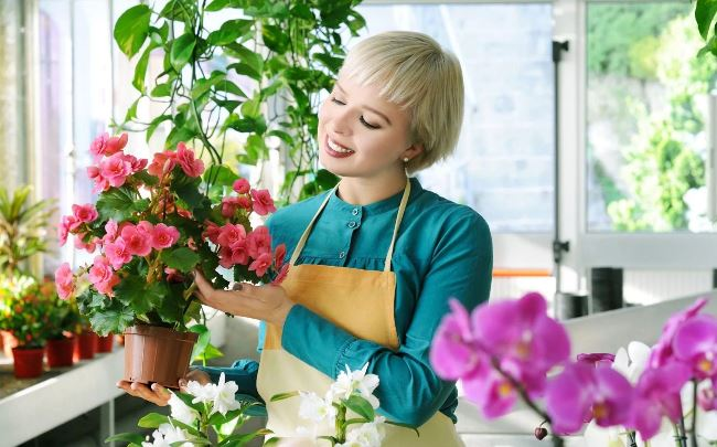 Выращивание комнатных цветов на продажу