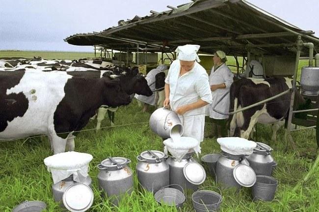 Производство молока в деревне