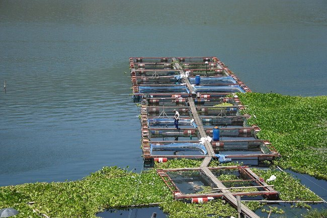 Рыбная ферма на озере