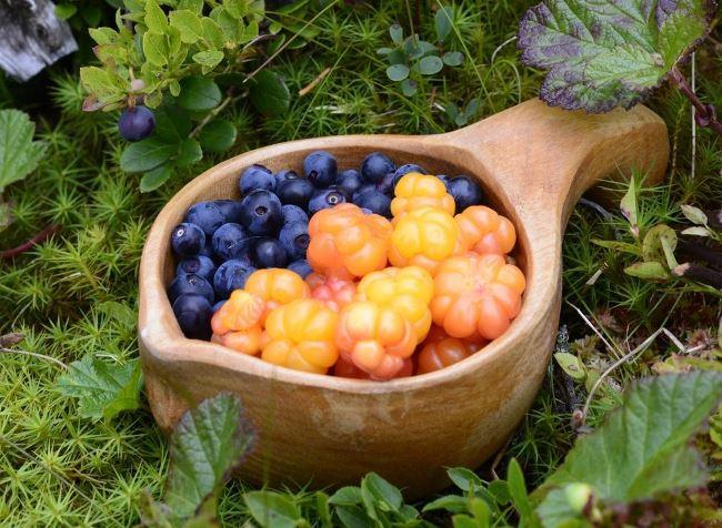Сбор лесных ягод