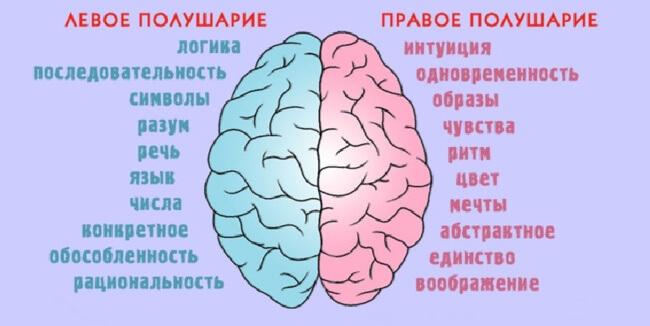 Полушария мозга и мышление