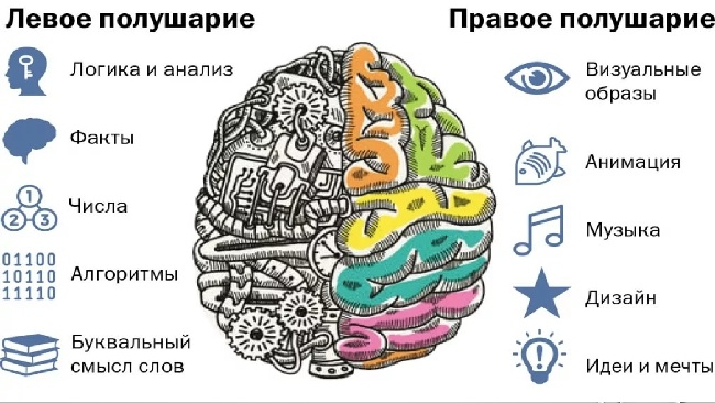 Правое и левое полушарие мозга